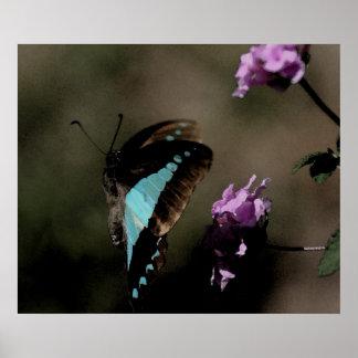 Extracto azul de la mariposa póster