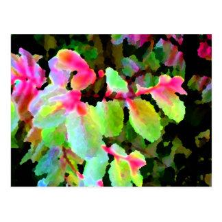 extracto colorido de la planta del snowbush postal