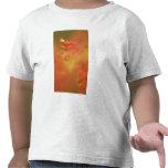 Extracto de la flor del castaño de Indias de la Camiseta