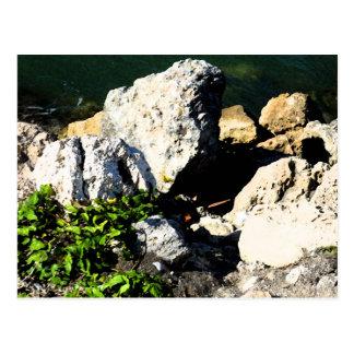 Extracto de la roca con la planta verde painterly tarjeta postal