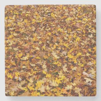 Extracto de las hojas de otoño posavasos de piedra