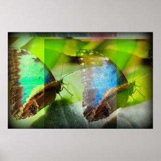 Extracto de las mariposas póster