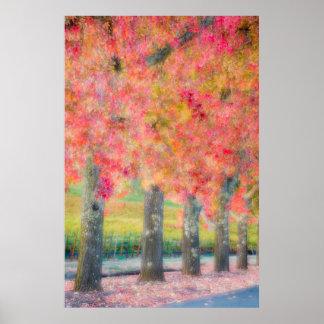 Extracto de los árboles de Napa Valley Impresiones