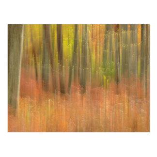 Extracto de maderas del otoño tarjetas postales