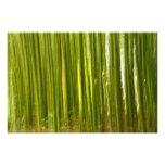Extracto del bambú impresion fotografica