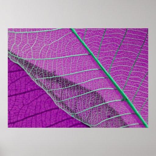Extracto púrpura de la hoja esquelética póster