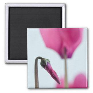 Extracto rosado de la flor imán cuadrado