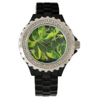 Extracto suculento verde de la planta de la playa relojes de pulsera