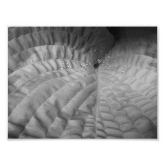 Extracto y Waterdrops-B&W de la hoja Fotografías
