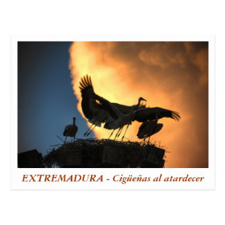 EXTREMADURA - Storks to the dusk Postcard