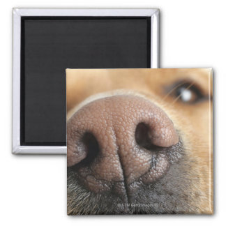 Extreme close-up of a dog nose. magnet
