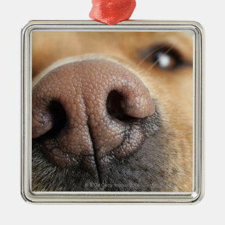 Extreme close-up of a dog nose. metal ornament