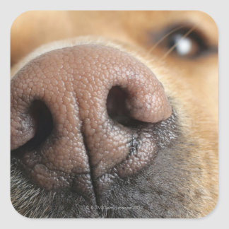 Extreme close-up of a dog nose. square sticker