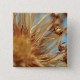 Extreme close-up of dried plant outdoors button