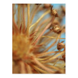 Extreme close-up of dried plant outdoors postcards