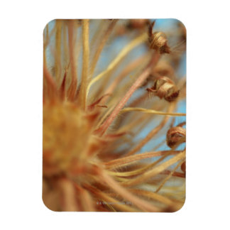 Extreme close-up of dried plant outdoors rectangular photo magnet