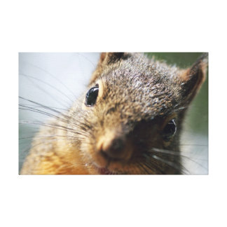 Extreme Closeup Squirrel Picture Stretched Canvas Prints