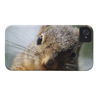 Extreme Closeup Squirrel Picture Blackberry Bold Cases