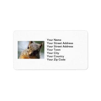 Extreme Closeup Squirrel Picture Custom Address Label