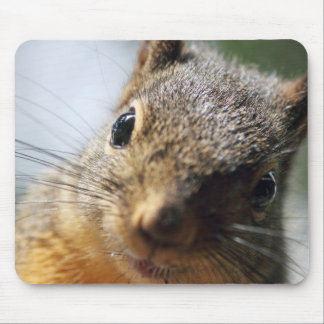 Extreme Closeup Squirrel Picture Mouse Pad