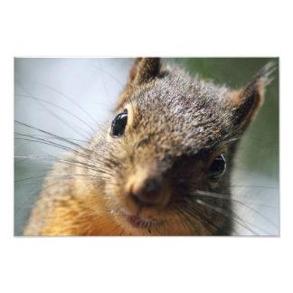 Extreme Closeup Squirrel Picture Photograph