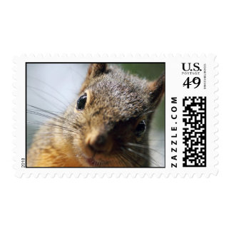 Extreme Closeup Squirrel Picture Stamps