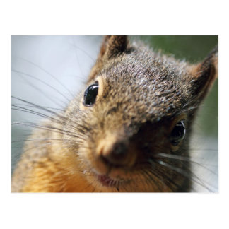 Extreme Closeup Squirrel Picture Postcard