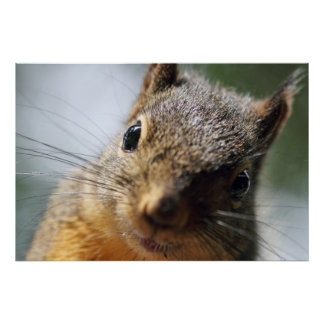 Extreme Closeup Squirrel Picture Poster