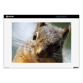 Extreme Closeup Squirrel Picture Decal For Laptop