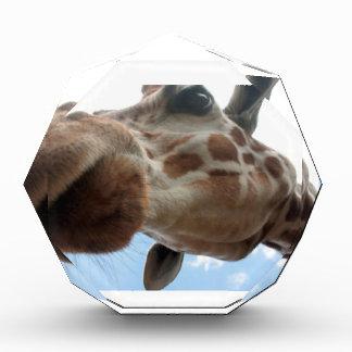 Extreme Giraffe Award