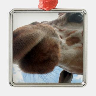 Extreme Giraffe Metal Ornament