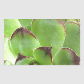 Extreme Hen And Chicks Rectangle Stickers