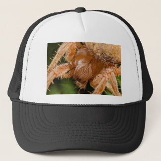 Extreme macro photograph of a brown spider trucker hat