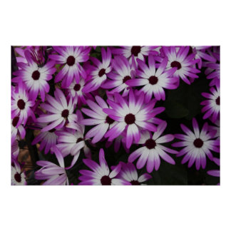 Extremidades púrpuras poster
