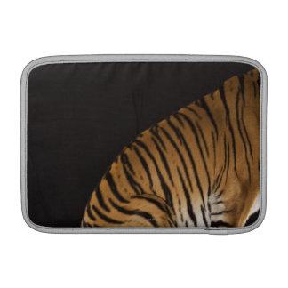 Extremo trasero del tigre que se sienta en la plat fundas para macbook air