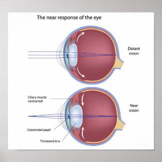 Eye adaptation to near vision Poster