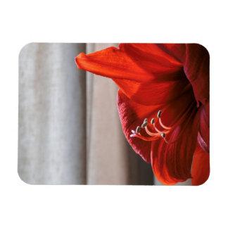 Eye-catching Red Lion Amaryllis Flower Magnet