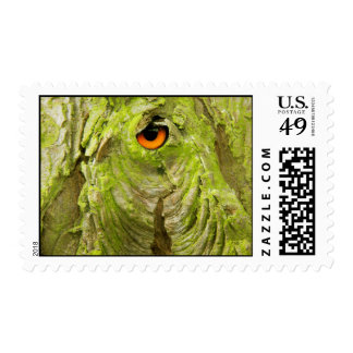 Eye in the Tree Bark Stamps