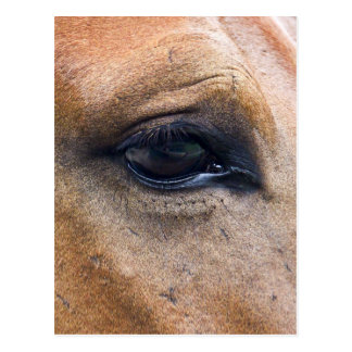 Eye of a Horse Postcard