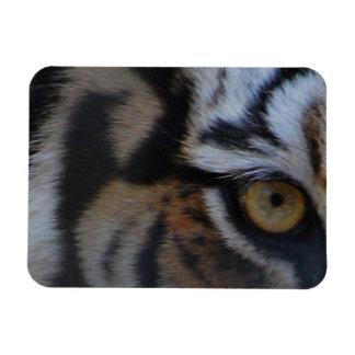 Eye-of-a-tiger412 TIGER PATTERN STRIPES EYE WILD A Magnet