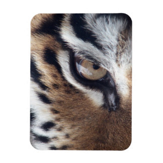 Eye of a Tiger Flexible Magnets