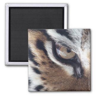 Eye of a Tiger Fridge Magnets