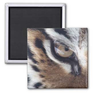 Eye of a Tiger Magnet