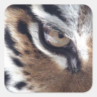 Eye of a Tiger Square Sticker