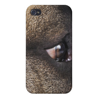 Eye of Great Dane Cover For iPhone 4