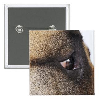 Eye of Great Dane Pinback Button