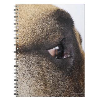 Eye of Great Dane Spiral Notebook