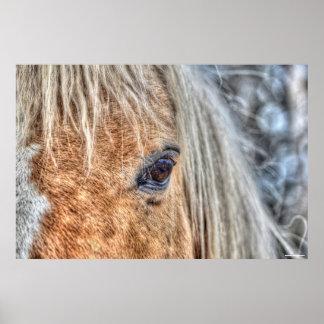 Eye of Horse Ranch Horse Palomino Paint Photo Poster