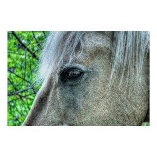 Eye of Horse White Ranch Mare Photo 2 Poster