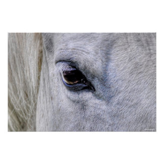 Eye of Horse White Ranch Mare Photo Poster